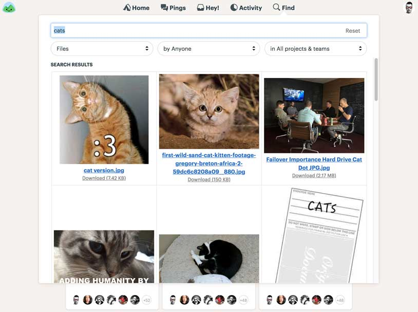 searching for cat pics in Basecamp